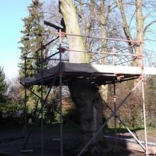 Bernard scaffolded